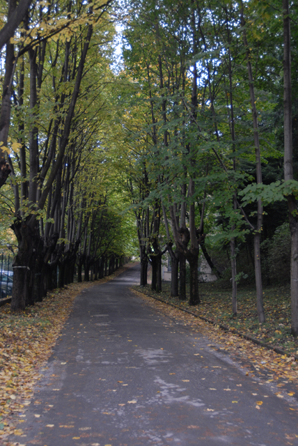 Parco dell'ex O.P. San Martino: viale di tigli